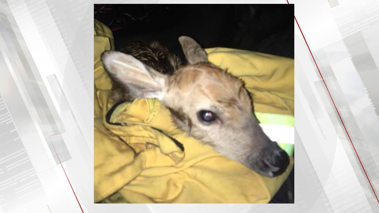 Quick Action By Oklahoma Game Warden Saves Newborn Fawn