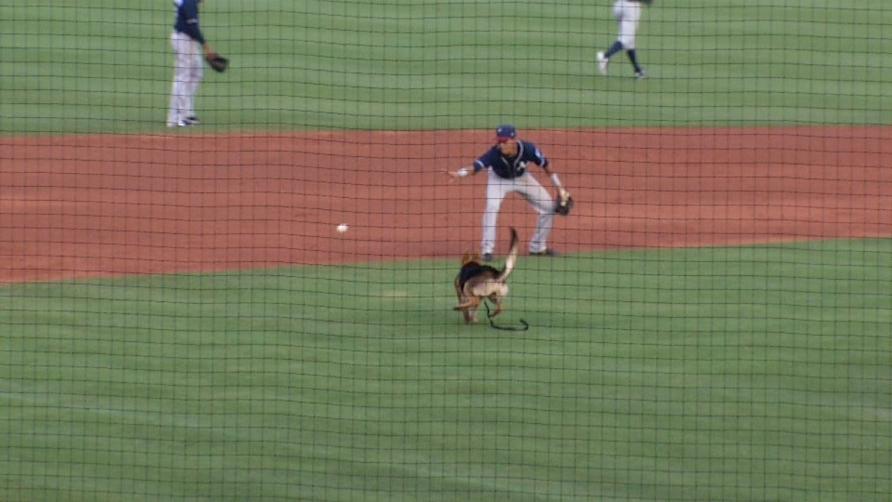 German Shepherd Enjoys Dog Day At Tulsa's ONEOK Field