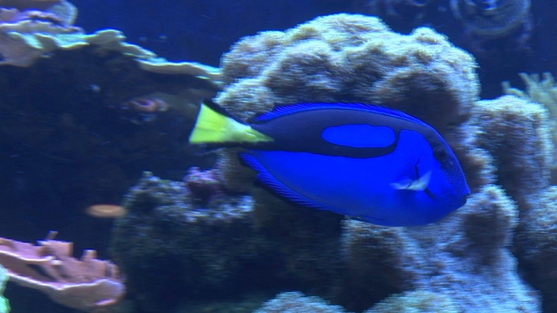 Tahlequah Man Gets New Outlook On Marine Life He Studies