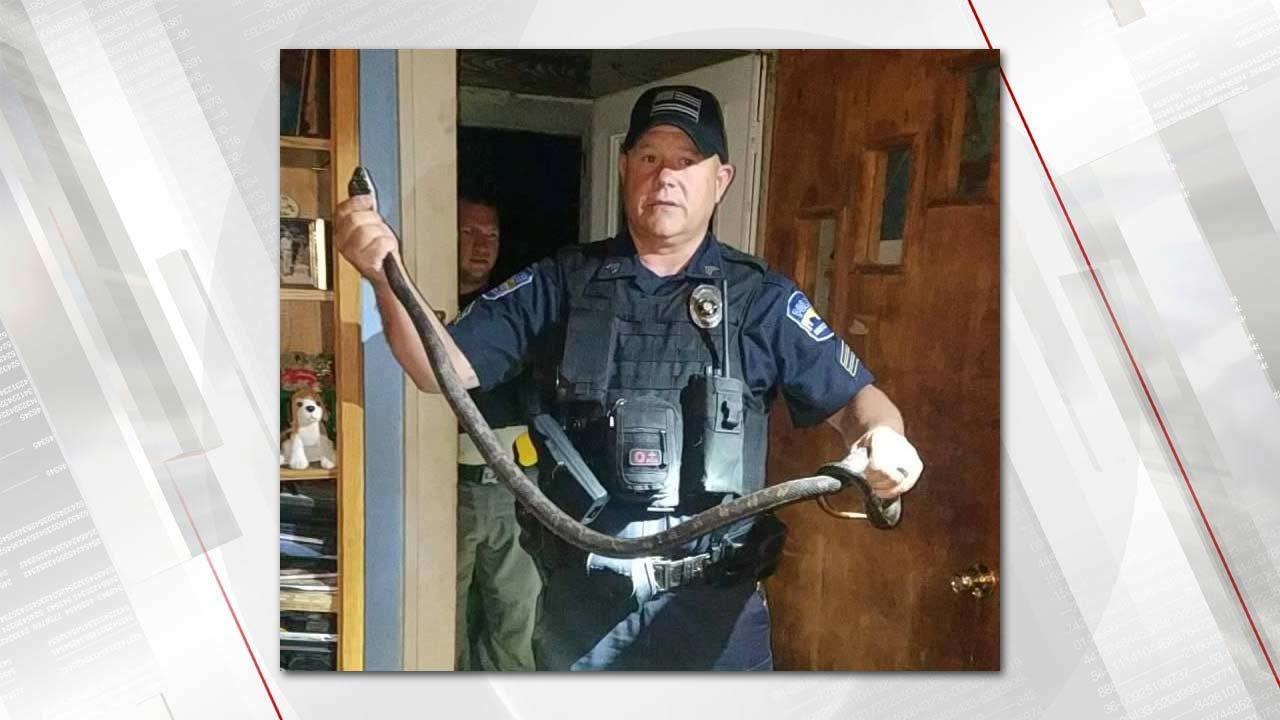 Unwelcome Intruder: Snake Captured In Bartlesville Bedroom
