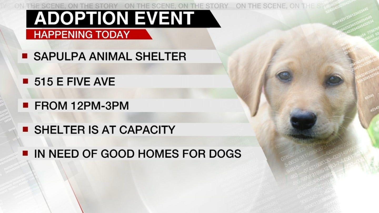 Sapulpa Animal Shelter Holding Adoption Event