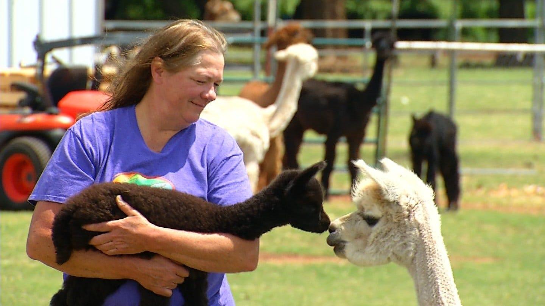 Oklahoma Family Raises Alpacas In Newcastle