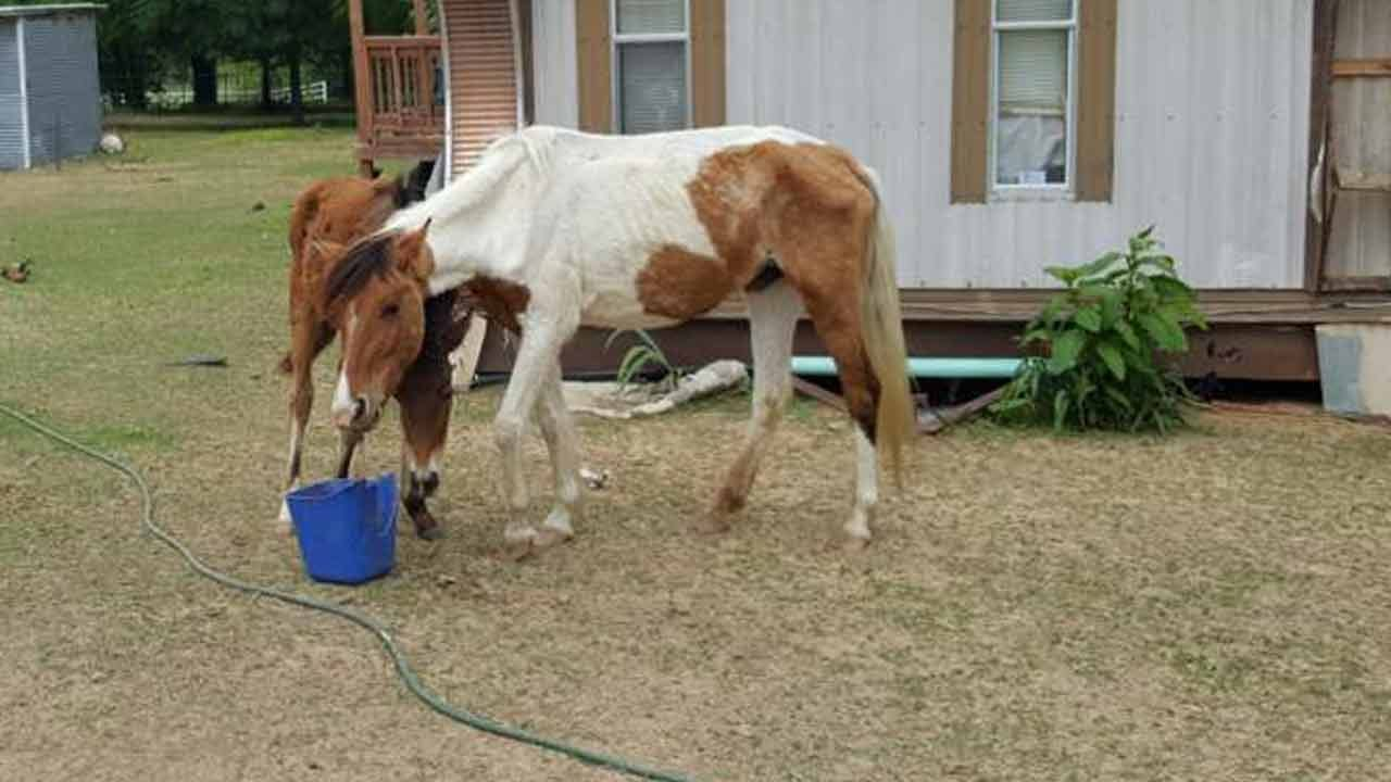 Five Starving Horses Rescued In Wagoner County
