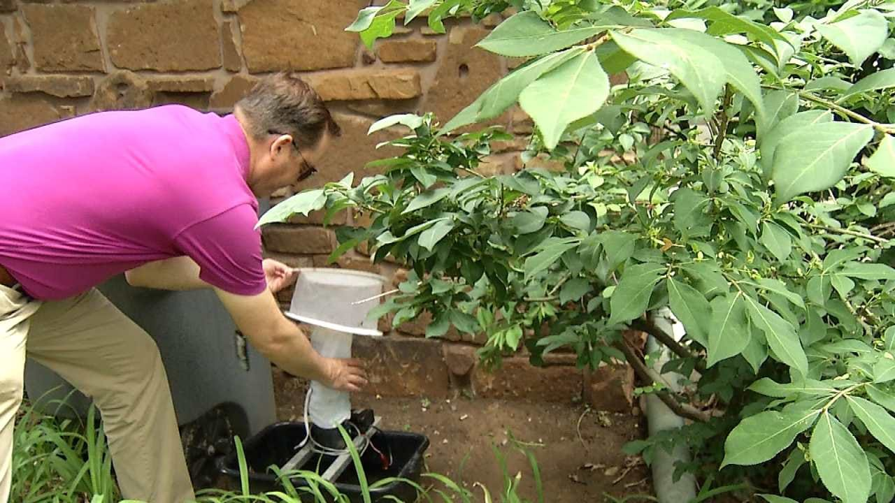 Efforts To Monitor Mosquito Population In Tulsa County