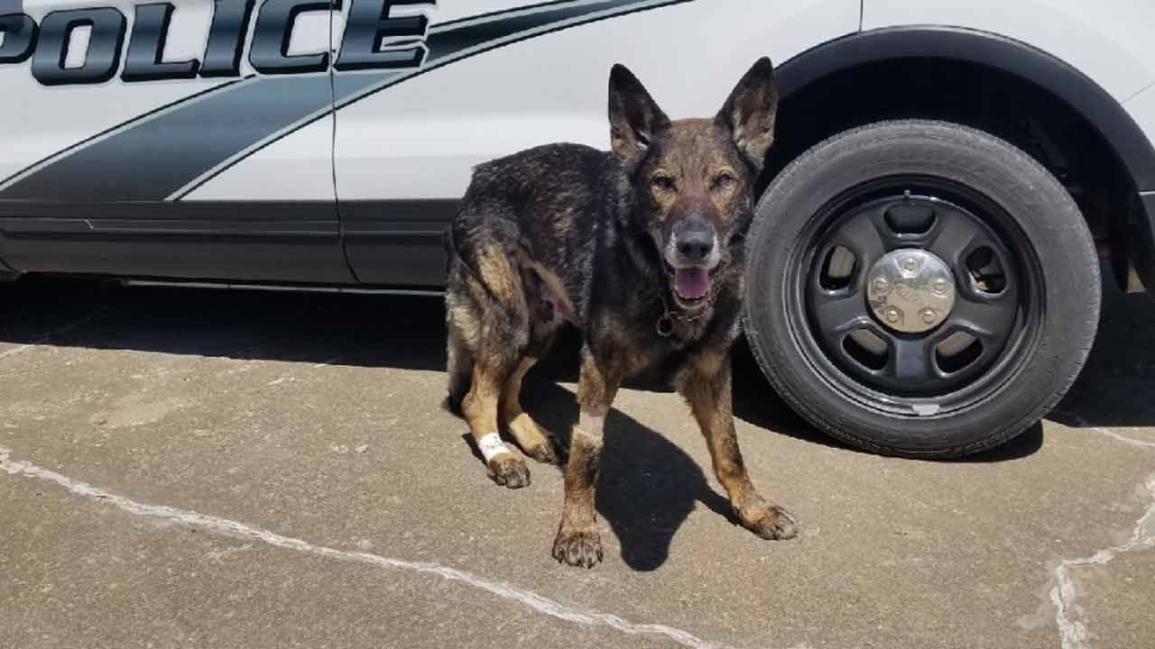 Bartlesville K9 Officer Making 'Miraculous' Recovery, Police Say