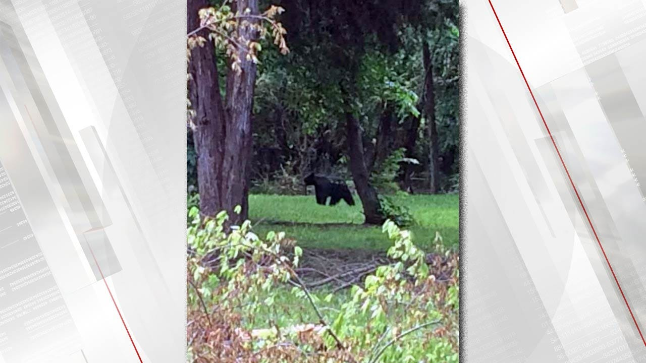 Bear Sightings In The Fort Gibson Area