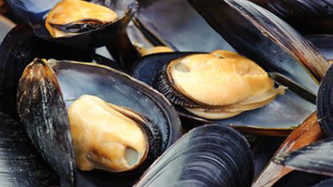 Mussels Off The Coast Of Seattle Test Positive For Opioids