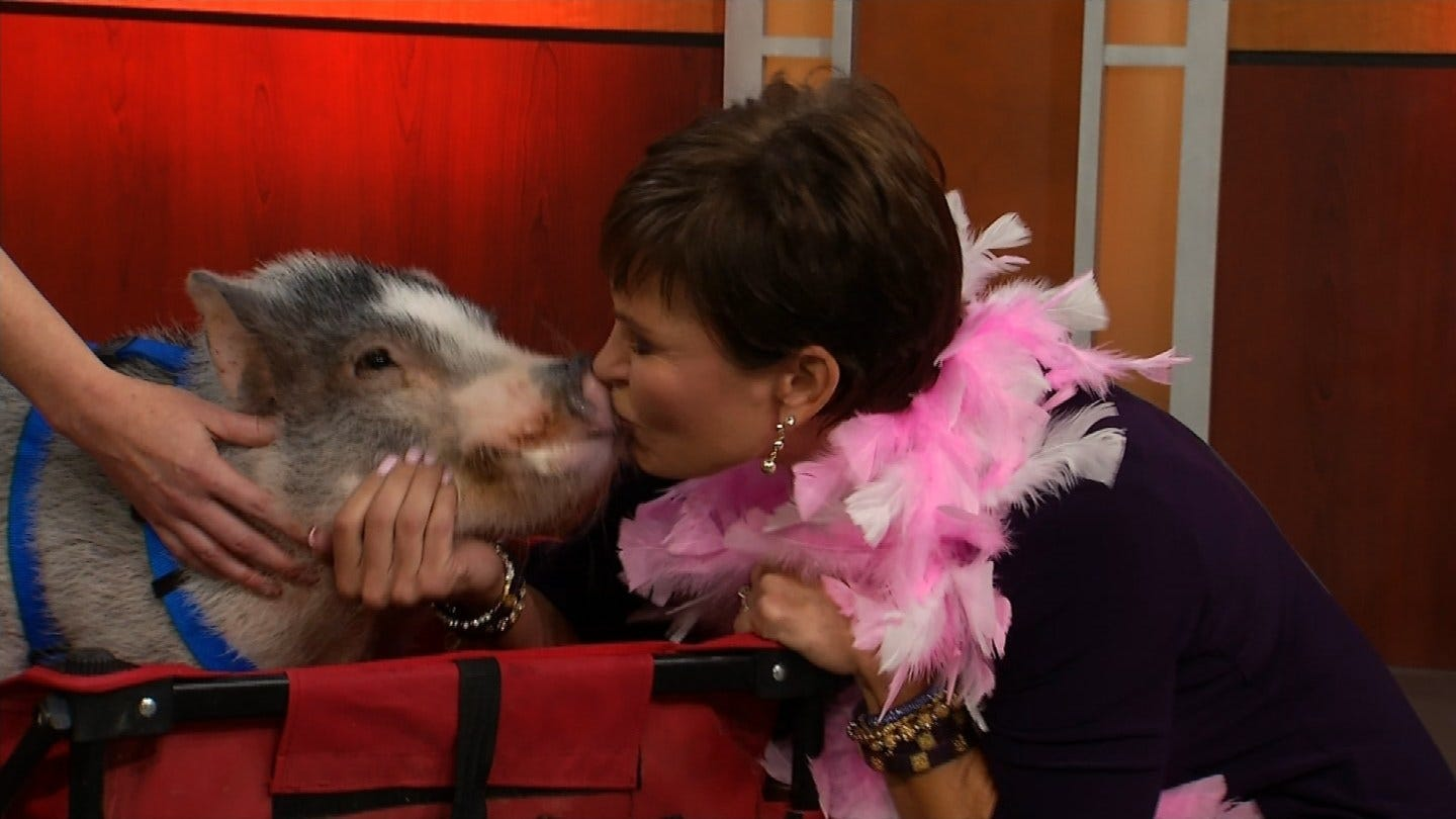 Lori Fullbright Kisses Georgie The Pig In Food For Kids Fundraiser