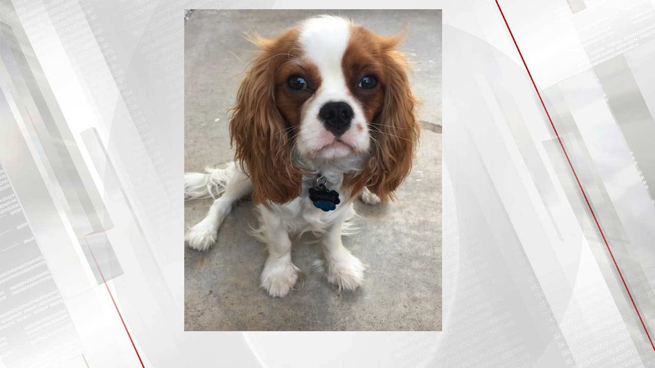 Dog Stolen During Home Burglary In Tulsa