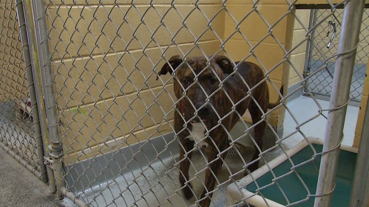 City Of Tulsa Works To Stop Distemper Outbreak