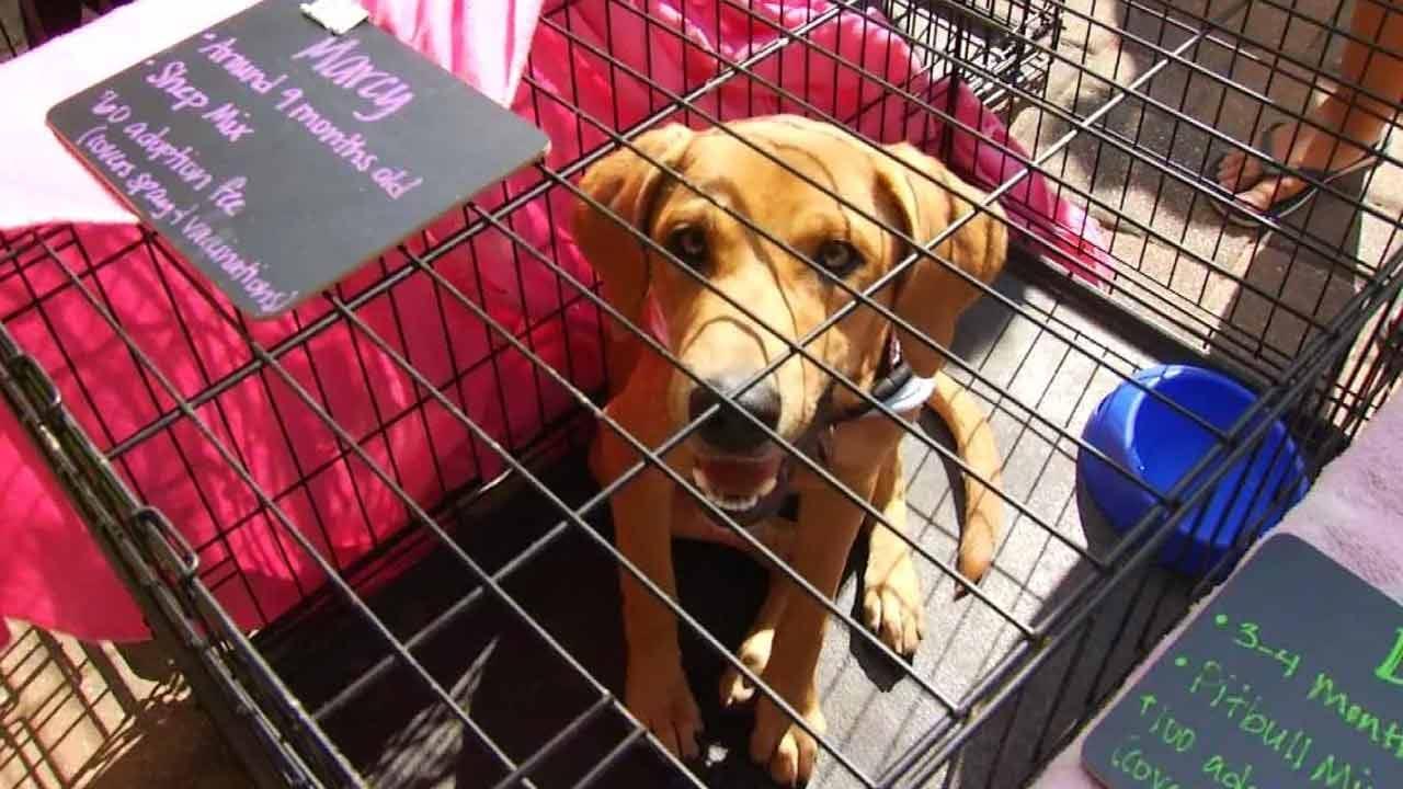 Don't Miss Woofstock Pet Adoption & Festival Saturday