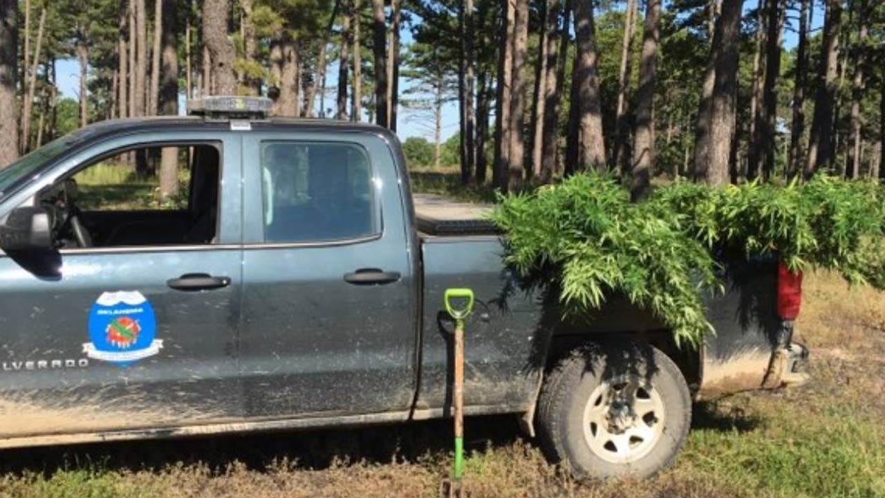 Game Wardens Uproot Illegal Marijuana Grow Site In Delaware Co.