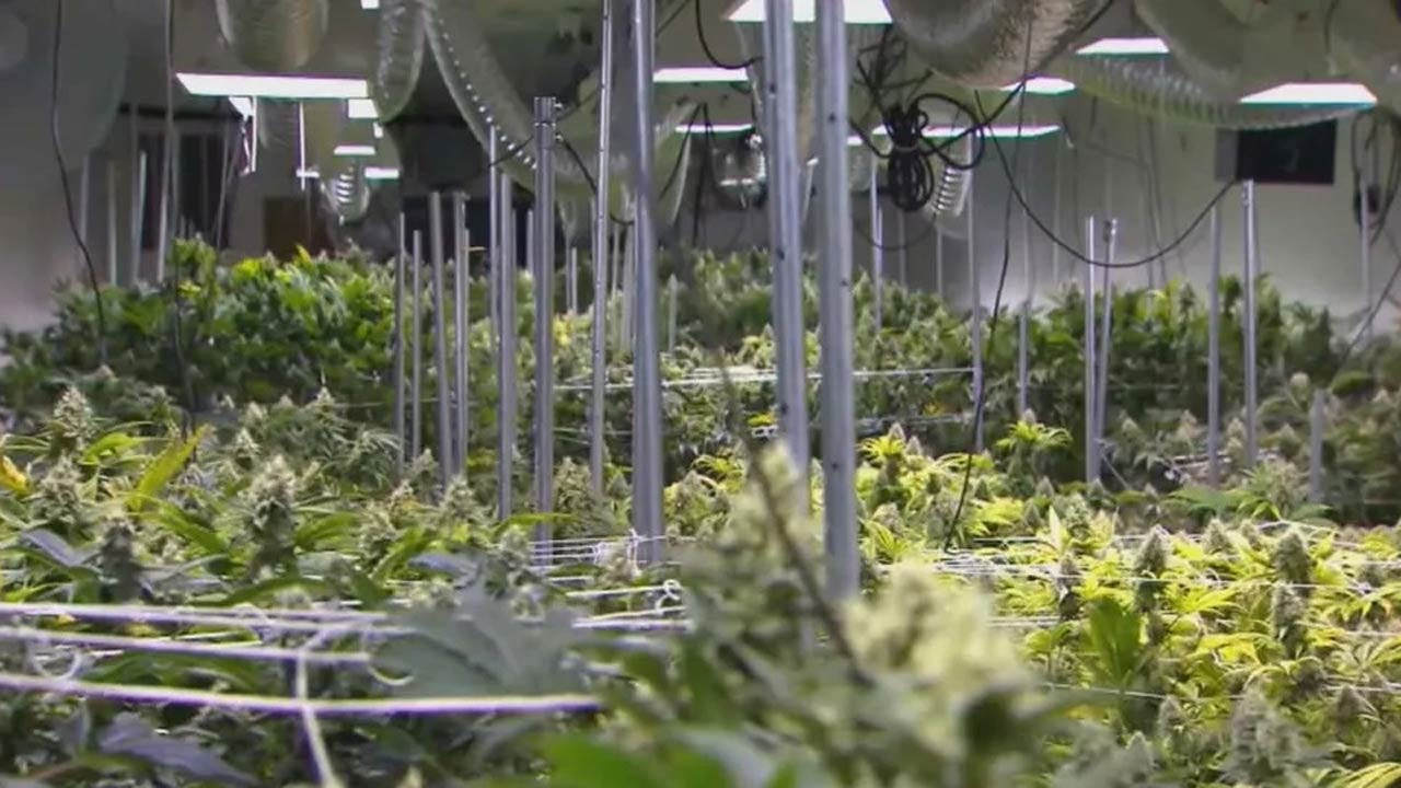 Tulsa City Council To Consider Moratorium On Marijuana Growing Permits