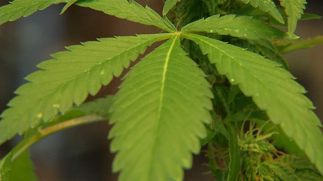 Judge Rules Against BA In Medical Marijuana Business Regulations Battle