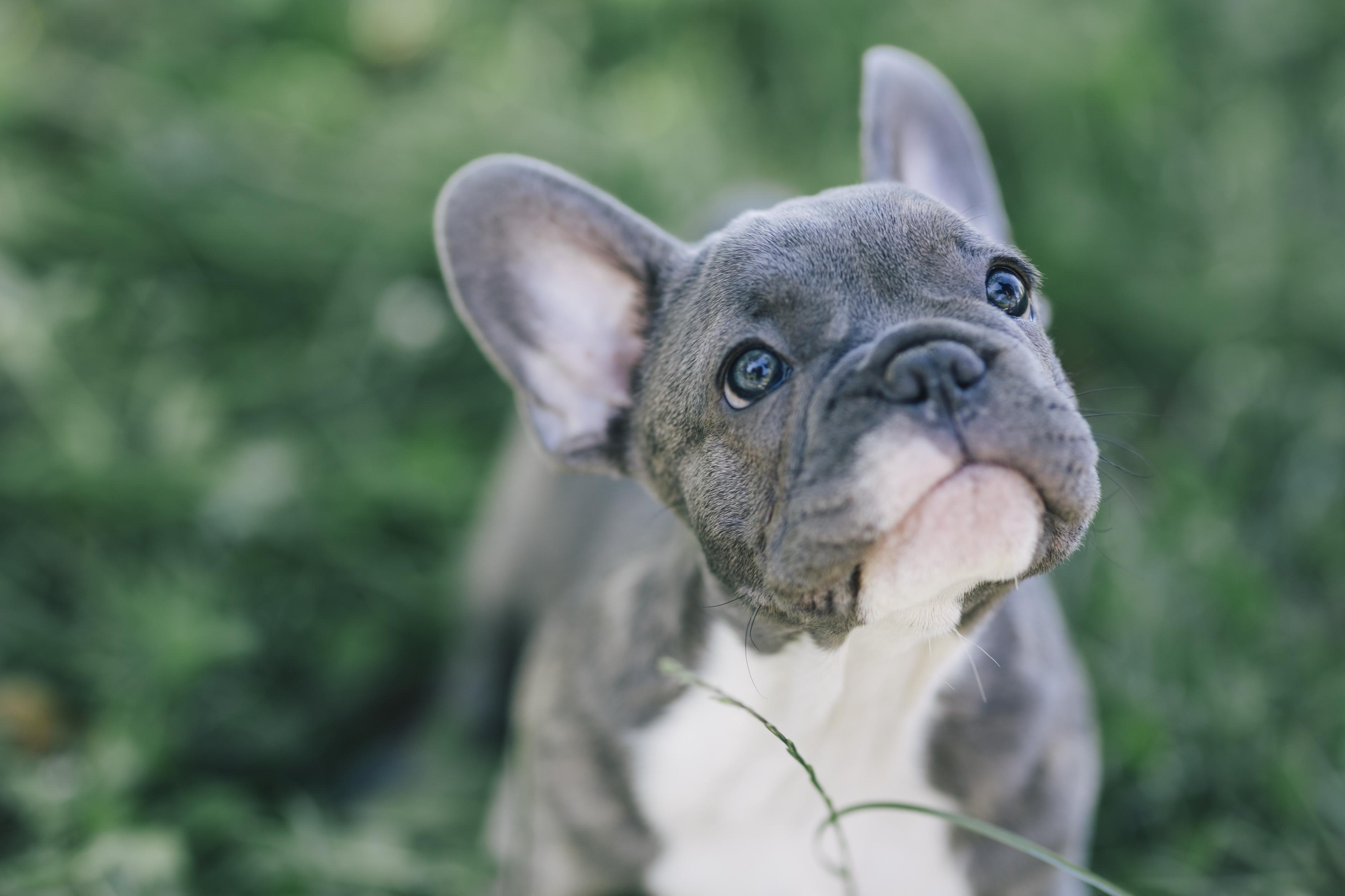 Origins of the 50 most popular dog breeds