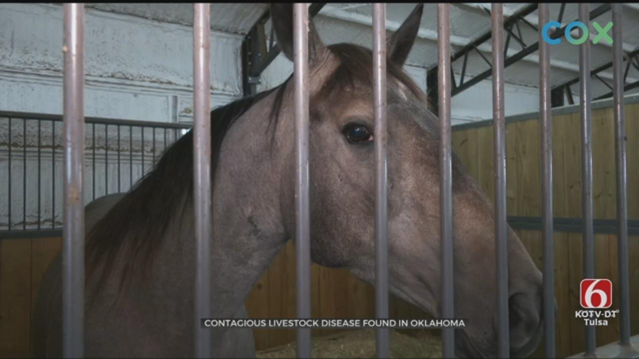 Tulsa Area Horses In Danger Of Disease