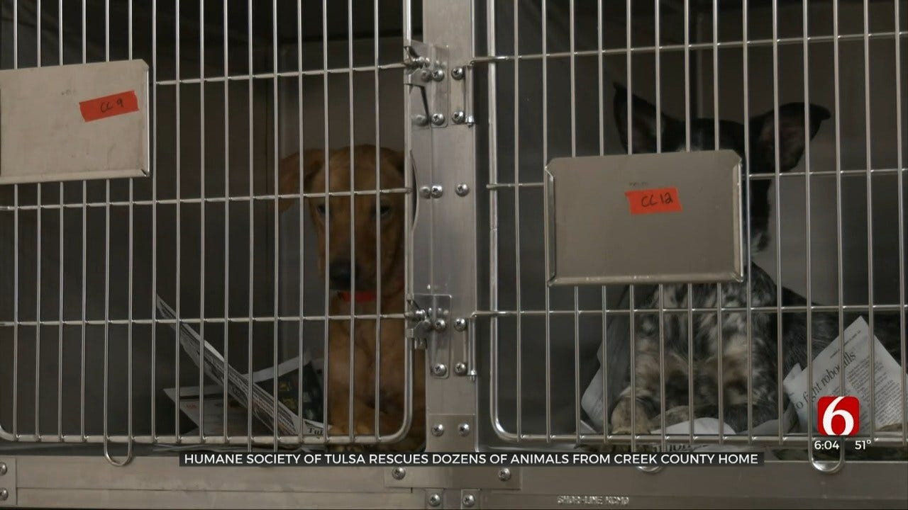 29 Dogs Rescued From Creek Co. Residence With Poor Living Conditions