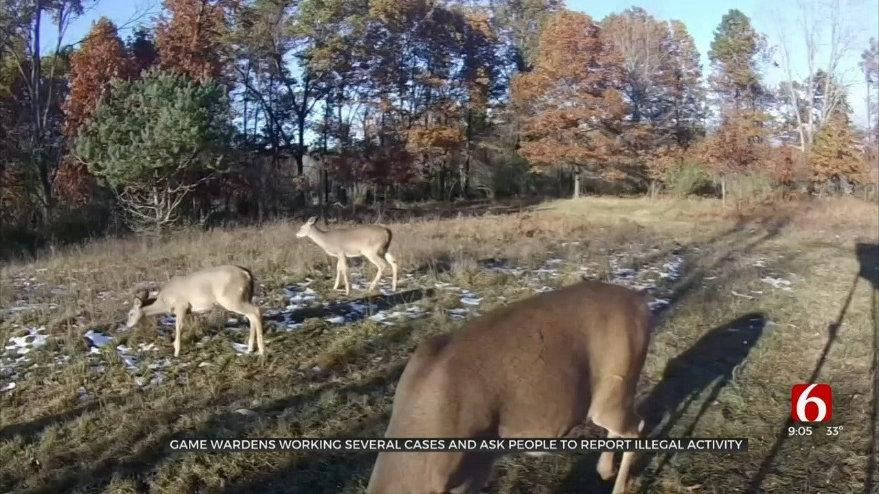 Oklahoma Game Wardens Working On Several Cases Of Poaching