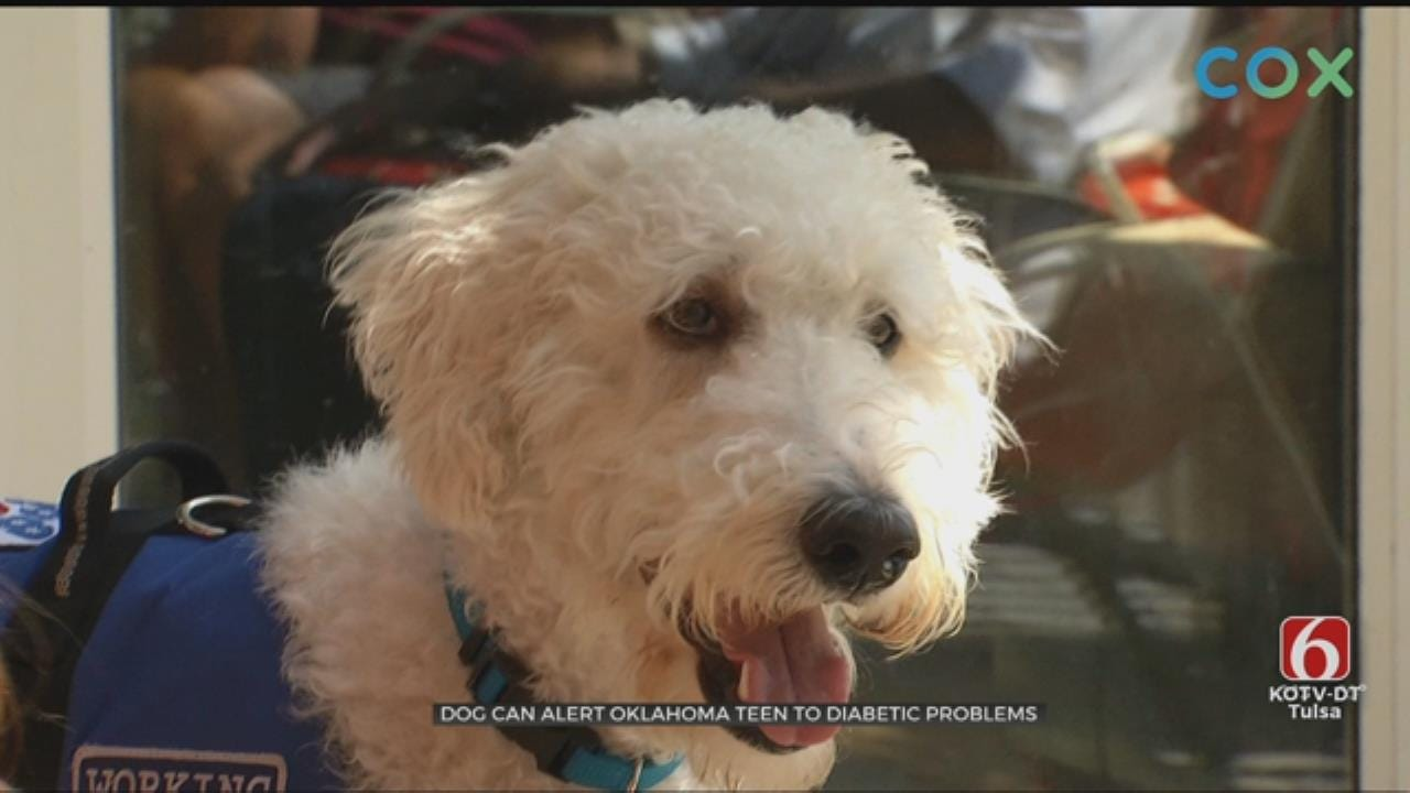 Oklahoma Teen Allowed To Live A Better Life Thanks To Her Dog
