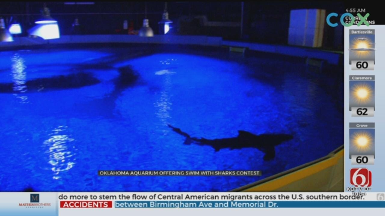 Oklahoma Aquarium Gives You A Chance At Swimming With Sharks