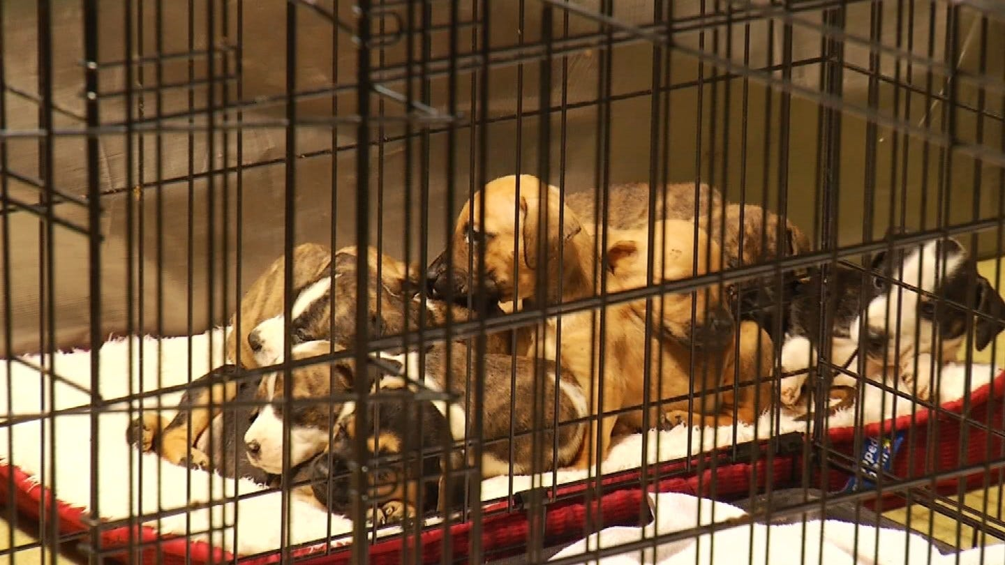 Displaced Pets Moving Out Of Tulsa Expo Square