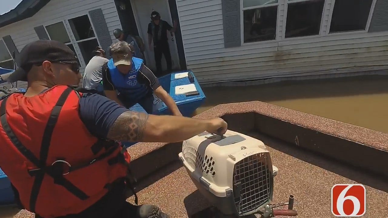Muskogee Cat Reunited With Owner After 7 Days Of Flooding