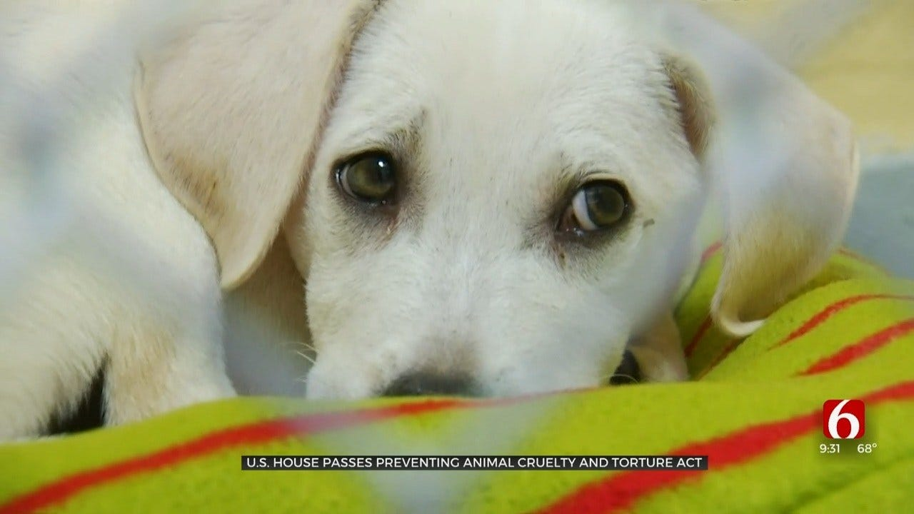Oklahoma Animal Activists Praise Lawmakers For Creating 'PACT Act'