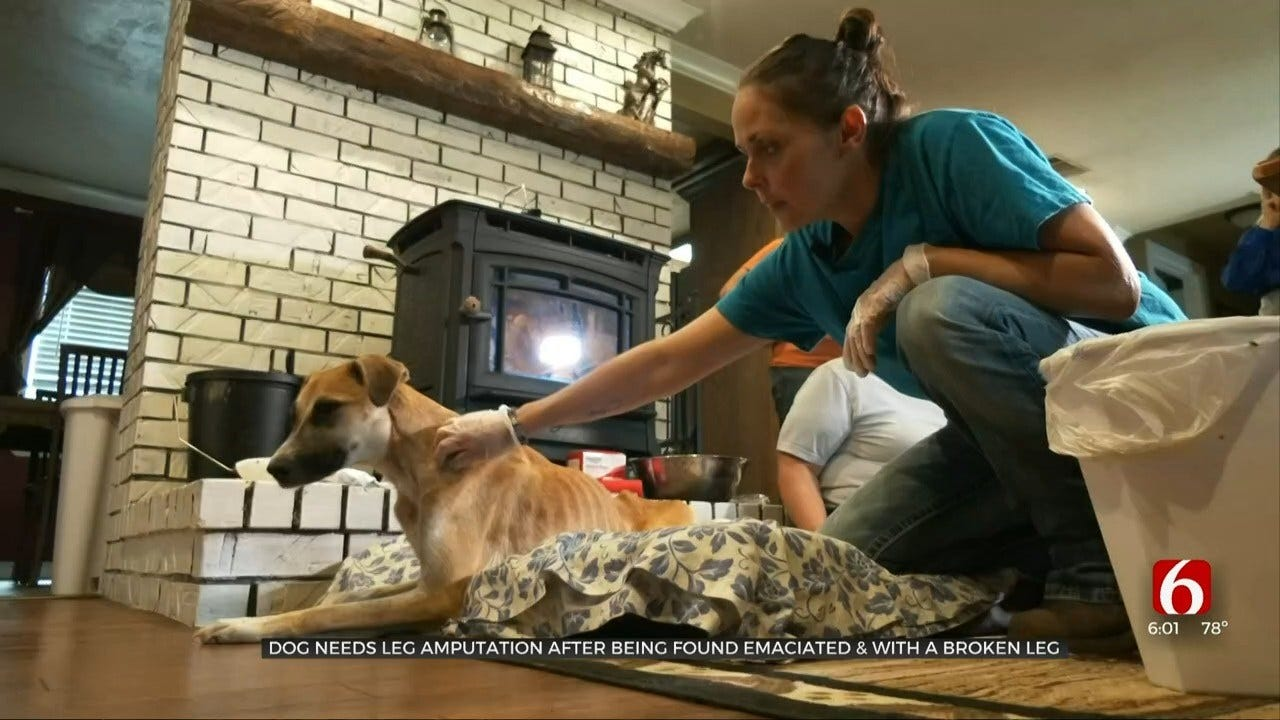 Locust Grove Dog Found Tied Up & Close To Death, Rescuers Say