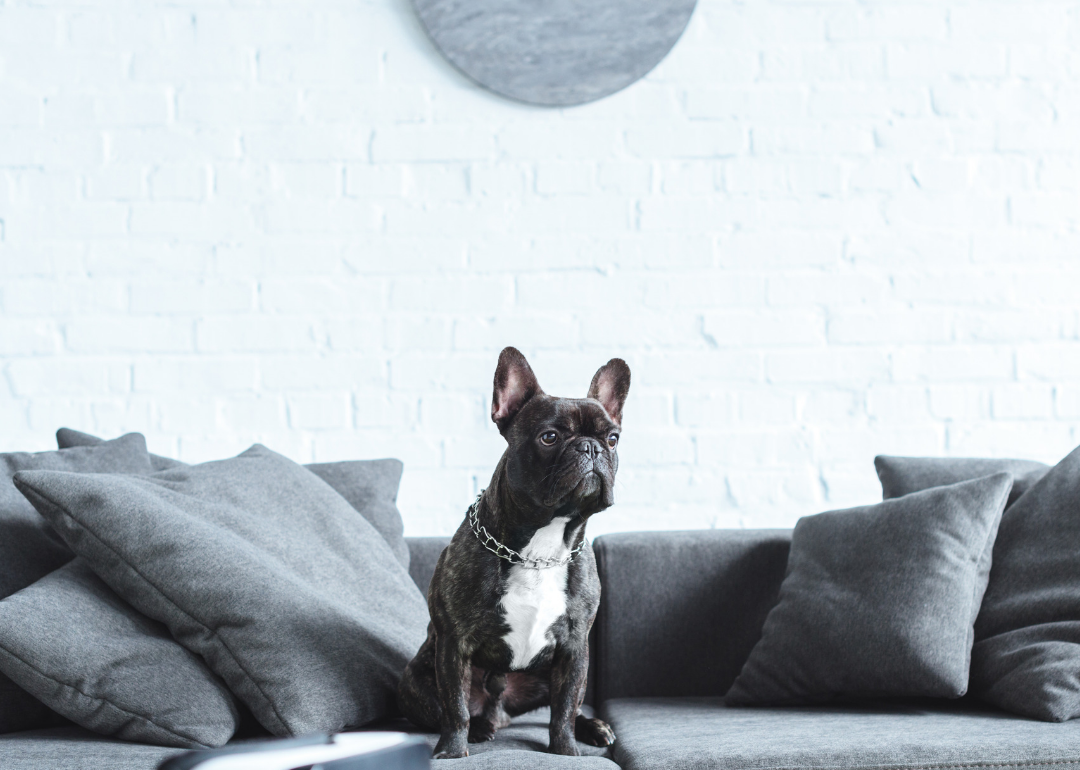 Most popular house-friendly dogs