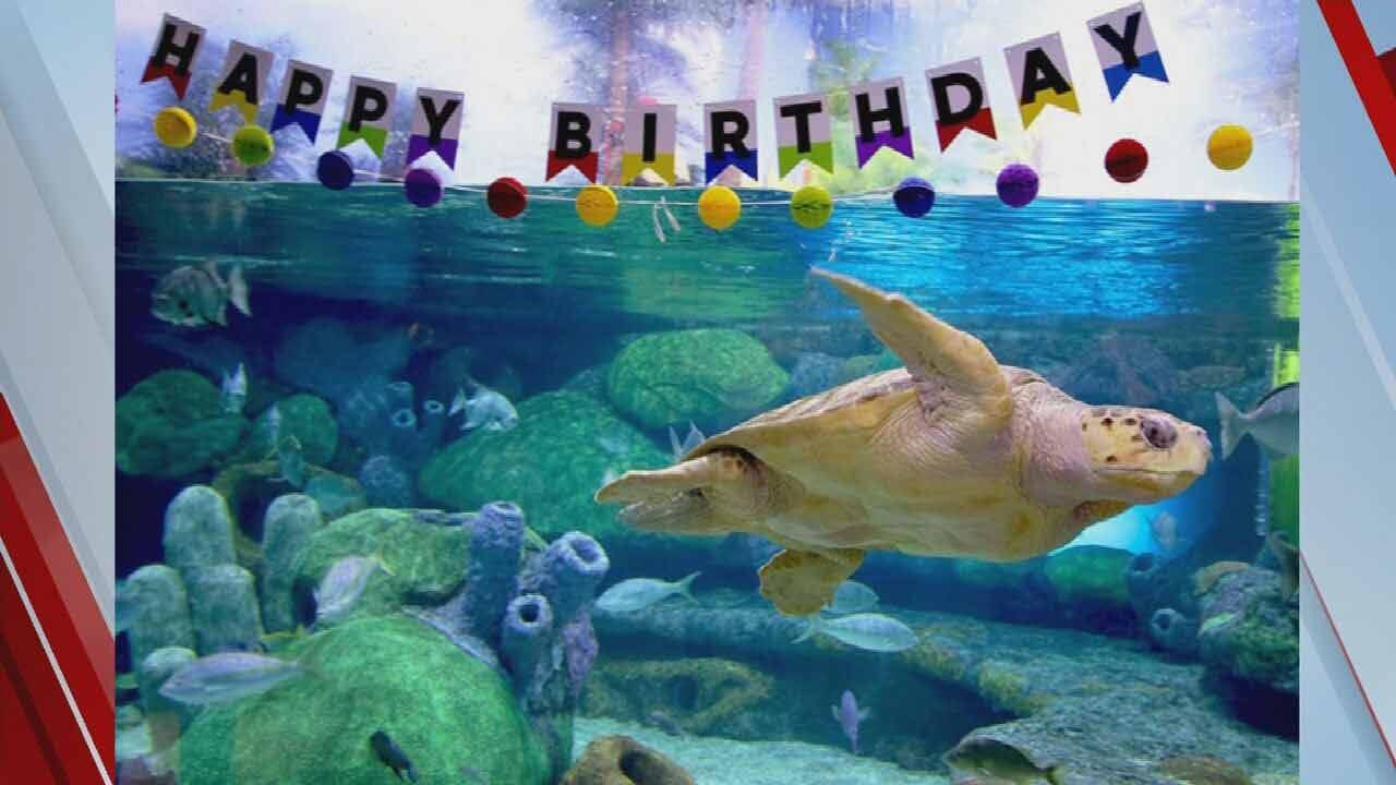 Help Name Oklahoma Aquarium's Loggerhead Sea Turtle