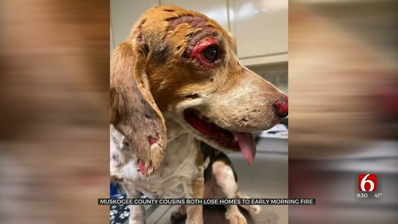 Muskogee Co. Fire Destroys Man's Home, Leaves Dog Severely Burned