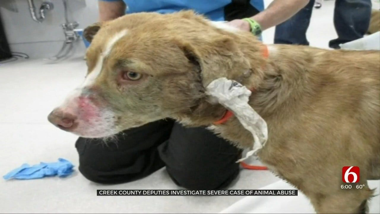 Creek Co. Deputies Search For Person Responsible After Dog Found Left For Dead
