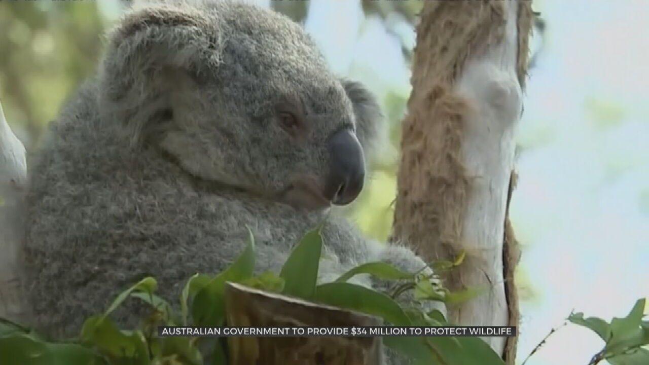 Oklahoma Aquarium Makes $5,000 Donation To Australian Animal Rescue Group