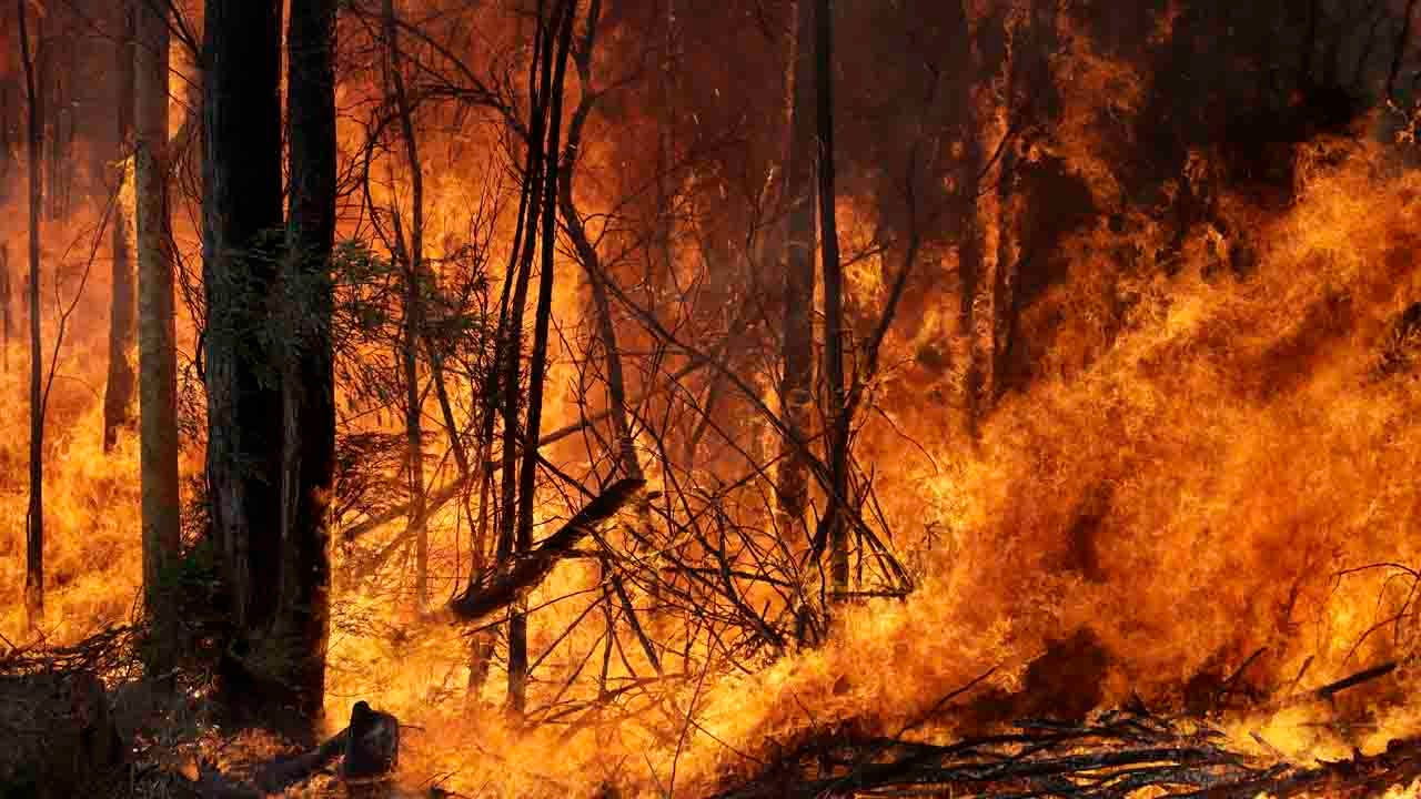 How To Help Victims Of Australia's Wildfires