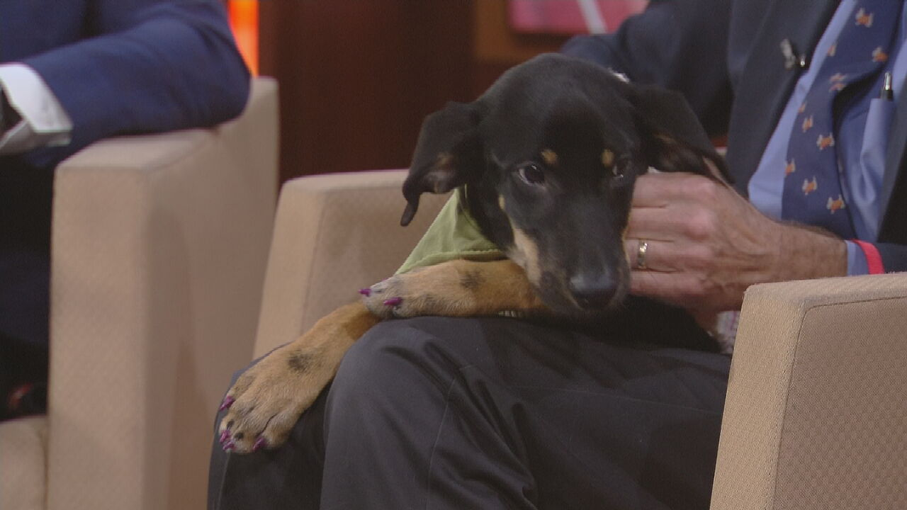 Pet Of The Week: Betty Lou Rou