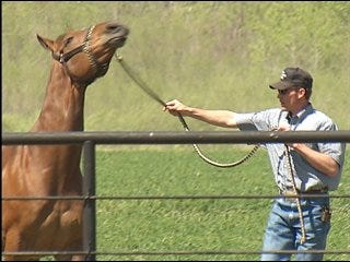 Oklahoma-bred horse runs for 17 straight wins
