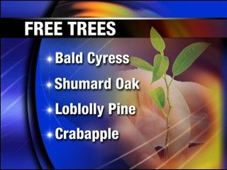 Free tree giveaway spruces up yards across the state