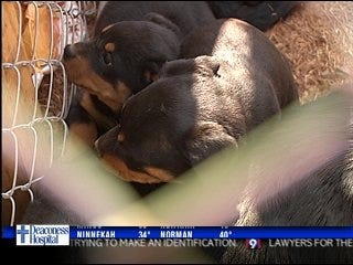 Economy leaving 4-legged victims, rescue workers say