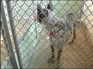 Puppy mill bust leaves dogs homeless