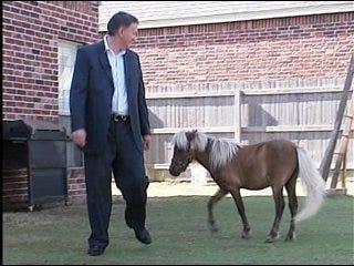 Mini-horse causes big dispute