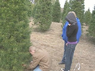 Oklahoma Christmas Tree Traditions