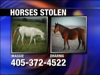 Woman desperately searches for her horses