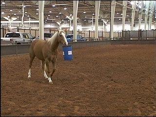 Cowboy trains horse to do tricks