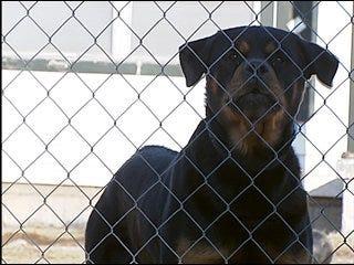 Lawmaker tries to tighten leash on dog attacks