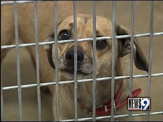 City rule could cost pet owners lots of money