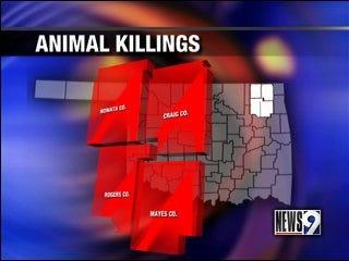 Wildlife department looking into cattle killings