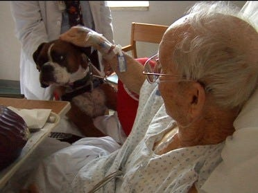 Patients undergo dog therapy