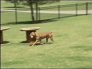 Judge rules to shut down pit bull kennel