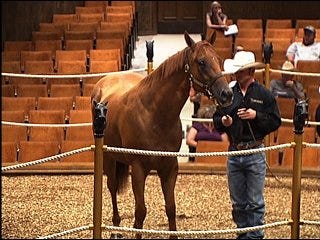 Confiscated horses up for auction