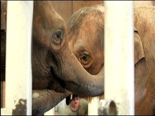 Zoo officials urge elephant romance